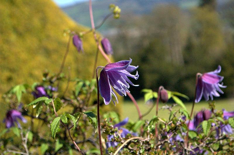 Powys Castle - Welshpool